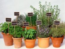 Pflanzen- Kräuterkunde im Botanischen Garten in Köln-Riehl